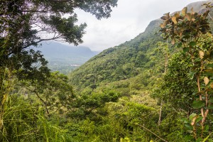 View of the Crater Rim and Dschungle in El Valle de Anton, Panama