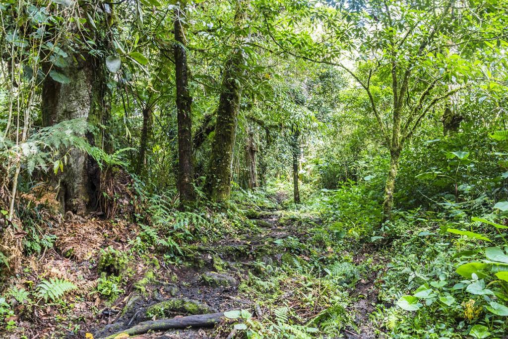 Boquete Quetzal Trail