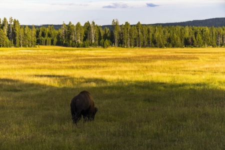 Yellowstone Nationalpark