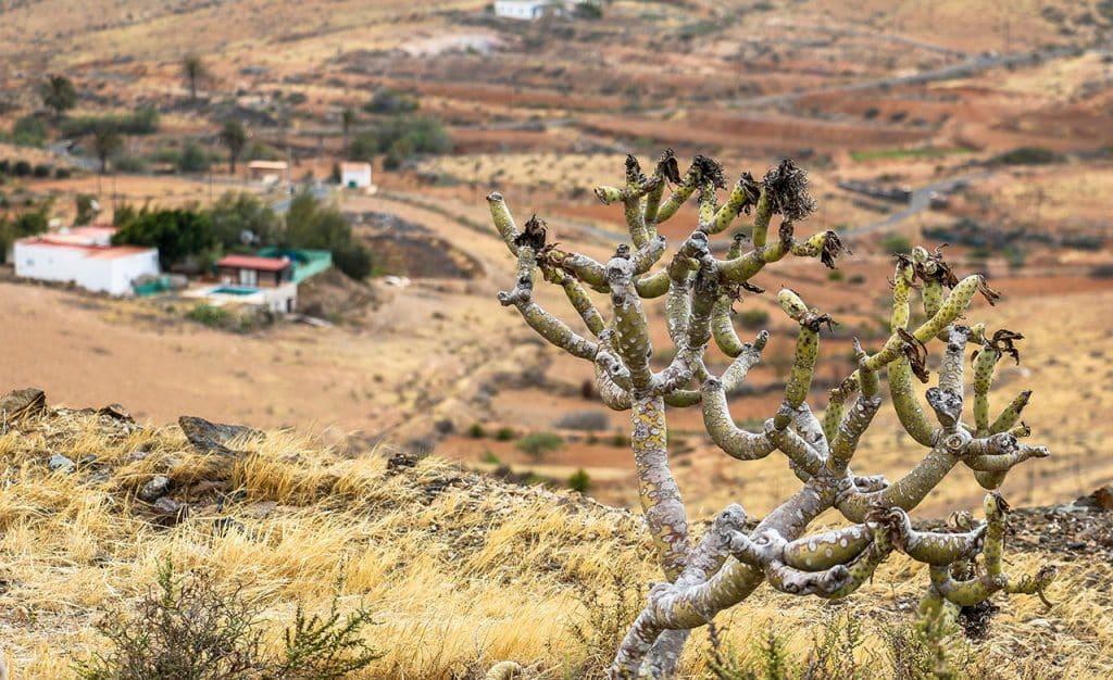 Fuerteventura Landschaft - Aussicht auf Prärie im Hochland